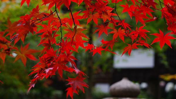 600-Japan-Nature-Autumn-Leaf